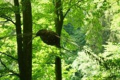 ptaki-lesne-3