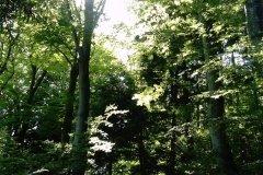 ptaki-lesne